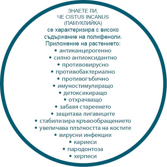 cistus incanus цистус инканус памуклийка описание